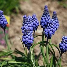 Blumen_Josefa_Schopper